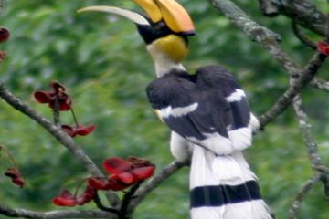 Bhutan Bird Watching Tour